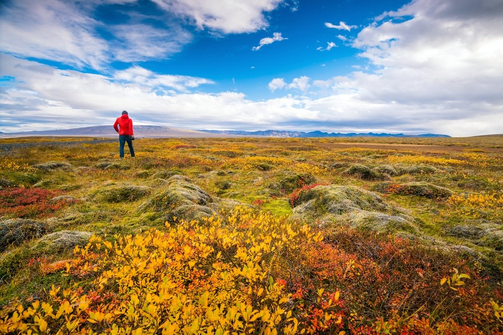PErson standing among colorful moss field in Iceland in autumn with blues sky